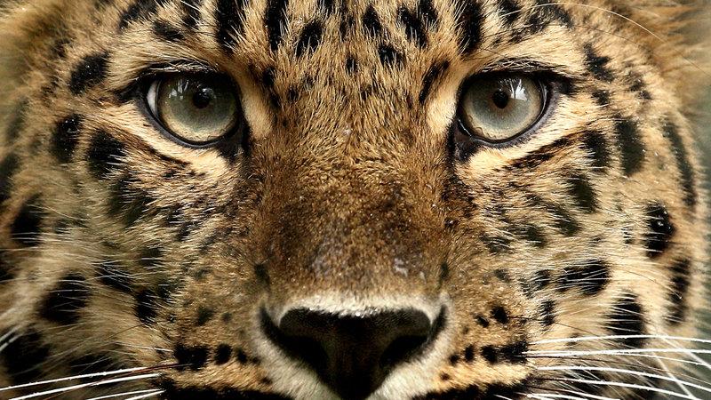 Petition · Toutes les personnes qui adorent les animaux