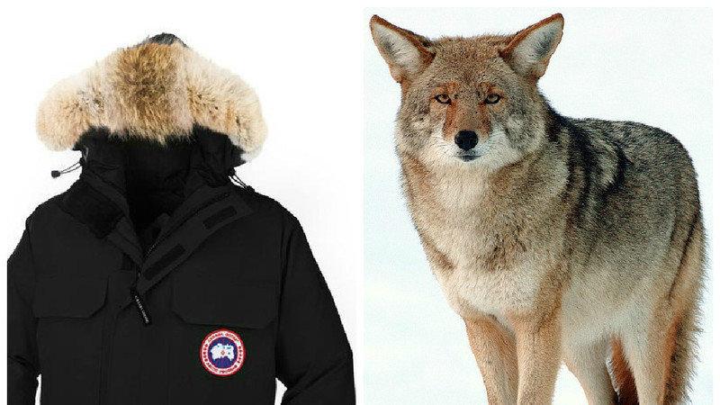 Canada Goose' fake fur