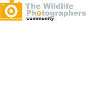 The Wildlife Photographers Community