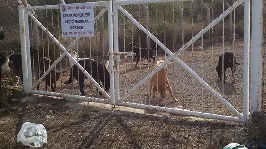 Girne Belediyesi Moves Street Dogs to Exposed 'Dog Shelter'