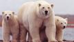 Safeguard Species; Reverse Bush's Last Minute Rules