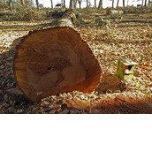 Plataforma Ciudadana para la Protección y Consevación del Bosque de La Genestosa