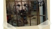 Host a party to put an end to puppy mills