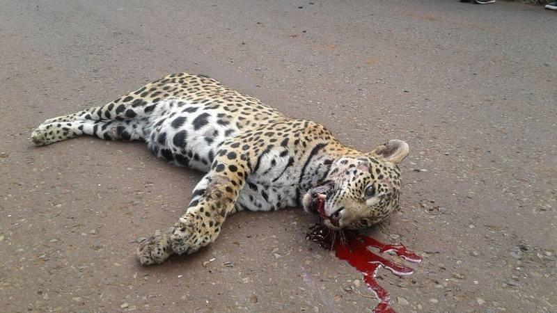 firmá para que los animales no sean atropellados
