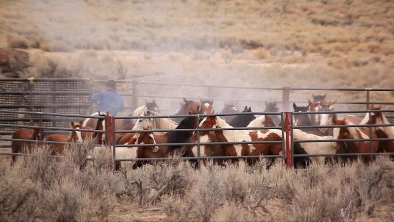 the slaughter of american horses Long-haul trucks ferried 102,554 horses to slaughter horses-being-shipped-to-mexico-canada-for-5379495php more horses being shipped to mexico, canada for slaughter.
