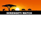 Serengeti Watch