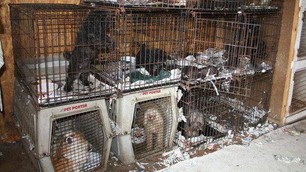 Craigslist Dogs For Adoption Ct