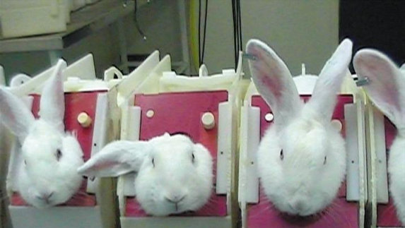 animal testing is cruel and unnecessary Animal testing is cruel, inhumane and unnecessary there are many ways for scientists to test product without abusing animals.
