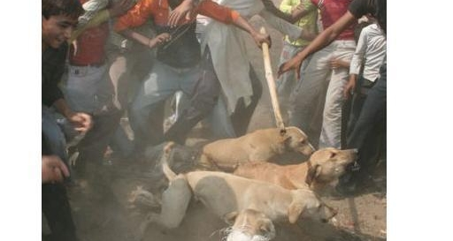 Sign Petition: Stop killing Dogs in Meerut,Uttar,Pradesh, India.