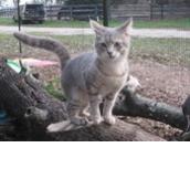 Haven Acres Cat Sanctuary