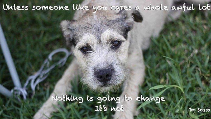 Petition · Annise Parker: Fix Houston's Homeless pet ...