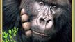 Send a Gorilla e-Card!