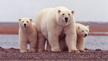 Ask the Senate to Save Our Natural World from Climate Change