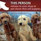 Stop the Sale of Pets in Pet Stores