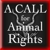 A CALL for Animal Rights Thailand