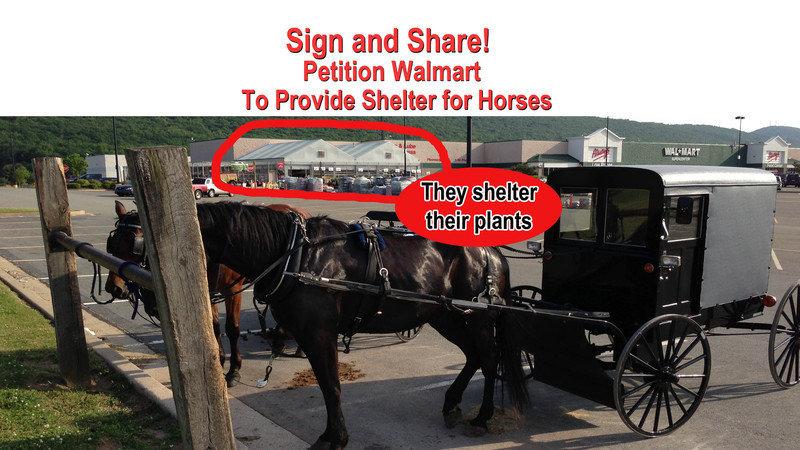 Petition Doug McMillon CEO Walmart Corp Demand