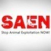 SAEN - Stop Animal Exploitation NOW!