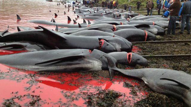 masacre-delfin