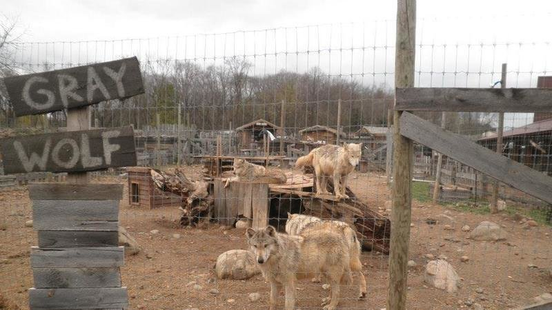 A Living Atrocity A Fur Farm Disguised As A Zoo With Wolves No Less