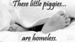 Urge people to participate in the Piggies Campaign